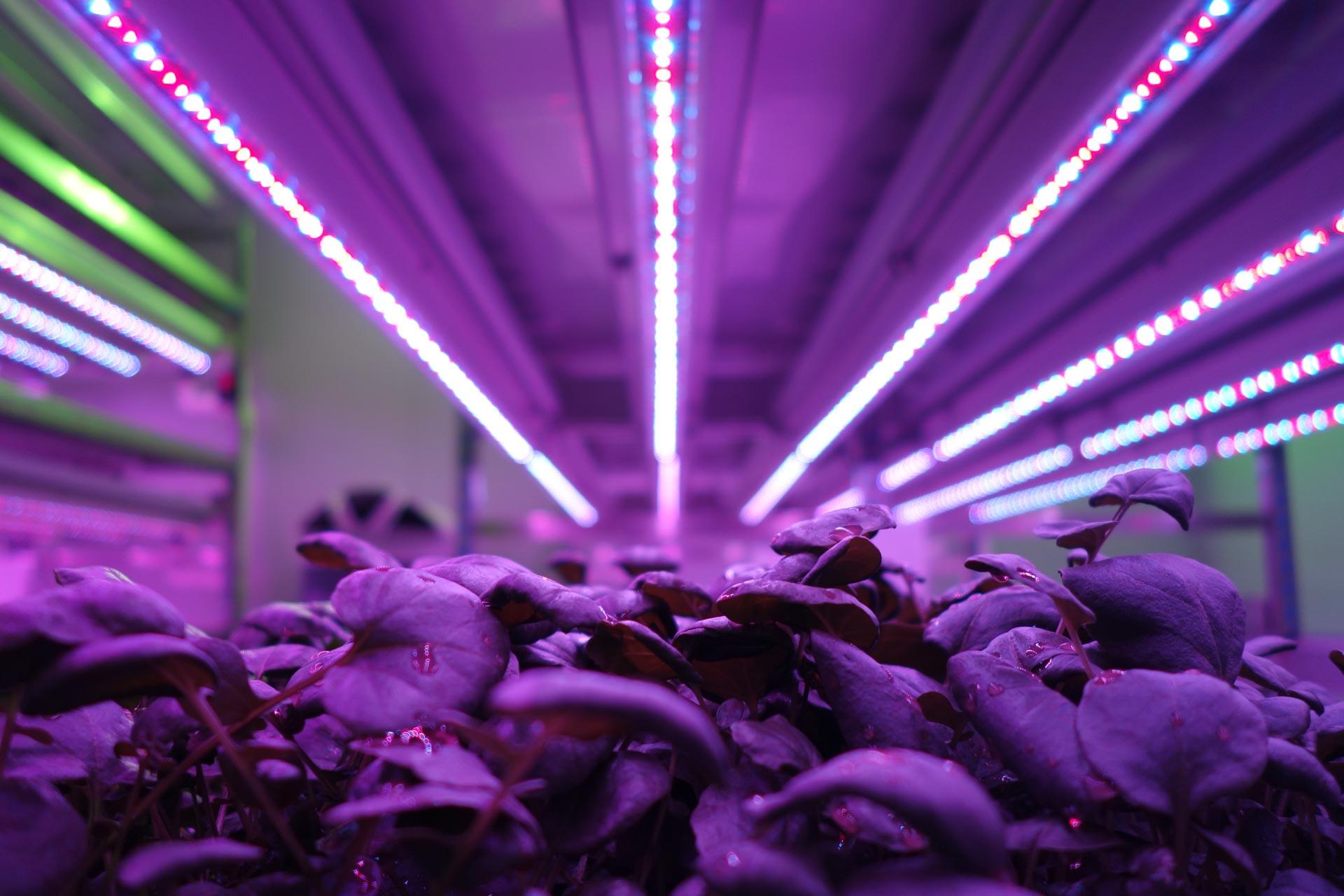 Indoor Vertical Farming Aralab