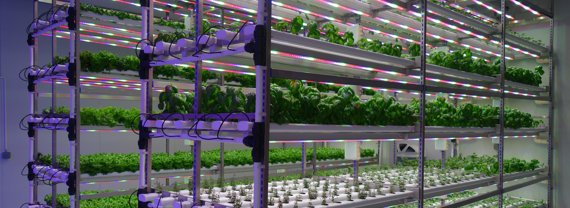 vertical farming plant factory market shares strategies and