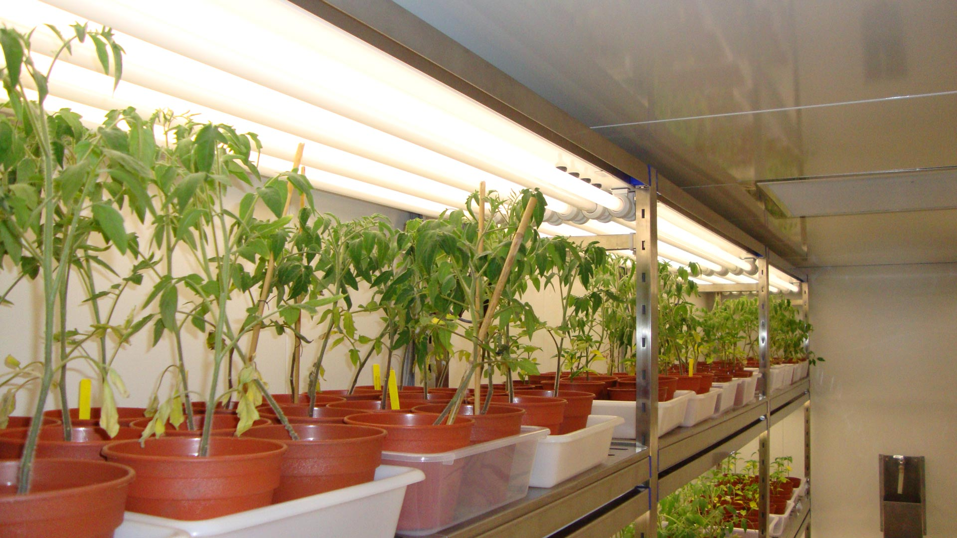 Plant Growth Research Lights Aralab